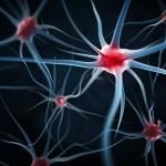 Ученые превратили клетки крови в нейроны