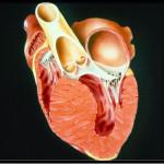 Физические нагрузки при кардиомиопатии