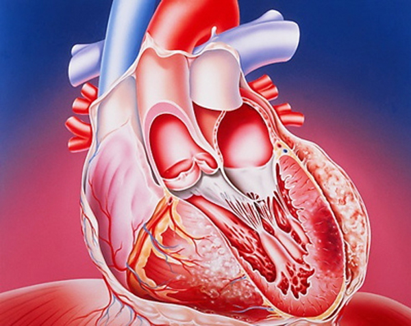 Физические упражнения после инфаркта миокарда