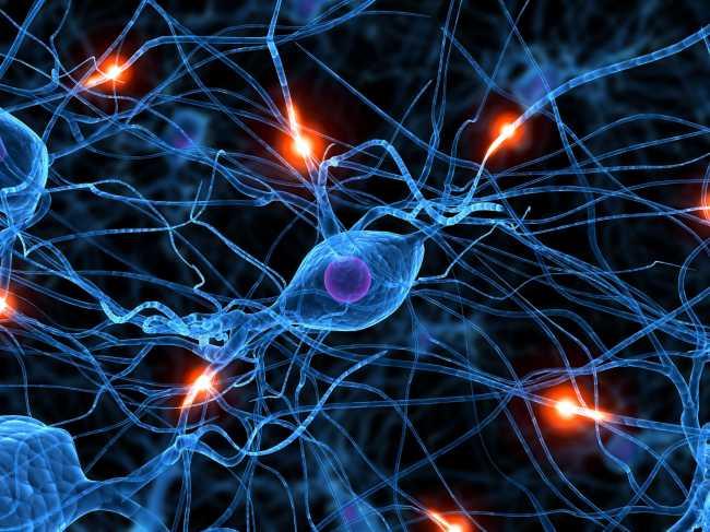 Ученые из Швеции создали искусственную нервную клетку
