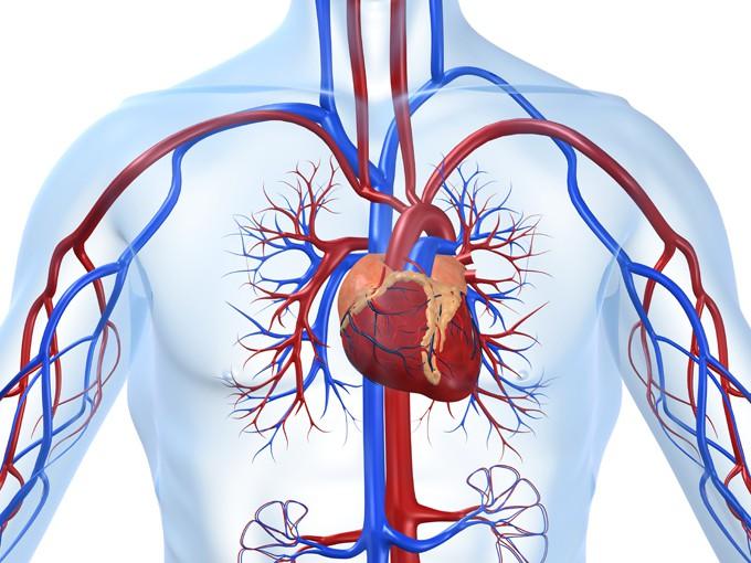 Чистка сосудов сердца: что для этого нужно