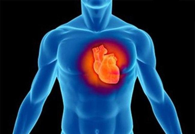 Избыток кальция приводит к смертельным заболеваниям сердца