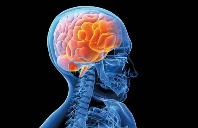 Ученые: интеллект зависит от толщины коры мозга