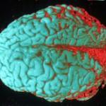 Томский государственный университет создал искусственный мозг