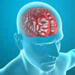 Ученые выяснили, что мозг учится на своих ошибках