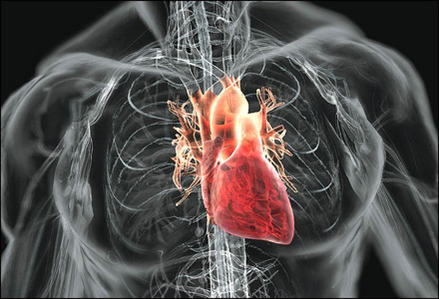 Змеиная кровь способствует росту сердца