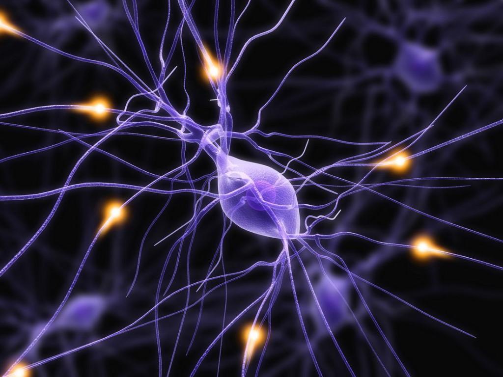 Исследование: от ожирения избавляет активация нервных клеток