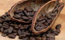 Какао: замечательное средство для улучшения памяти