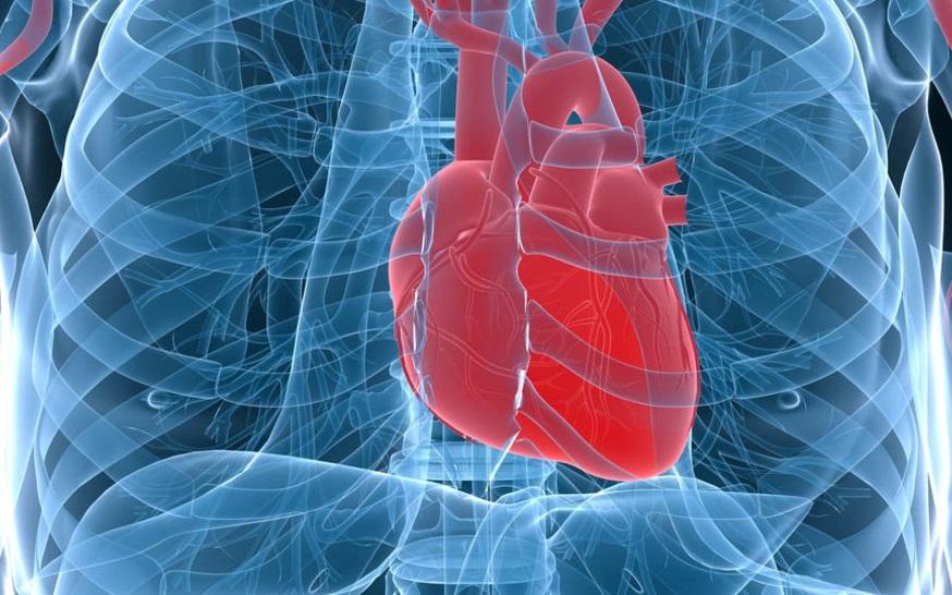 Полные бедра – защита от сердечных недугов!