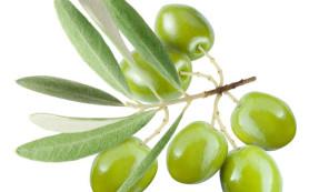 Оливковые листья  — мощный антиоксидант