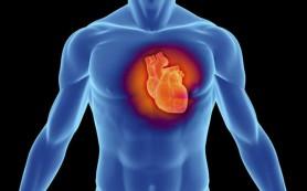 Препараты из трав для укрепления сердечно-сосудистой системы
