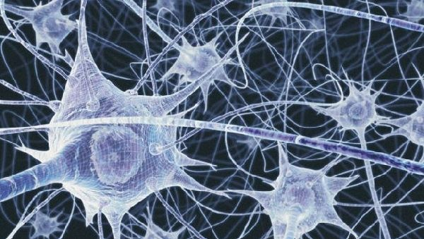 Математика раскроет тайны мозга