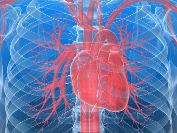 На европейском рынке появится новый препарат против сердечной недостаточности