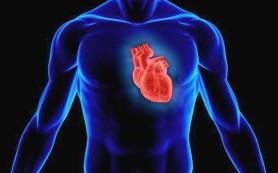 Тестостерон и сердце: враги или друзья?