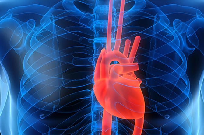 Как избежать риска развития сердечных недугов
