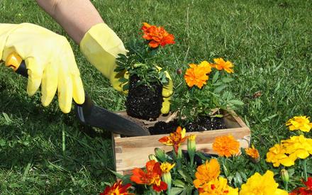 Работа в саду и на огороде: лучшая защита от проблем с сердцем