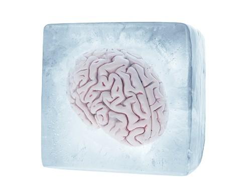 Мозг кролика успешно заморозили и разморозили, не повредив нервные клетки