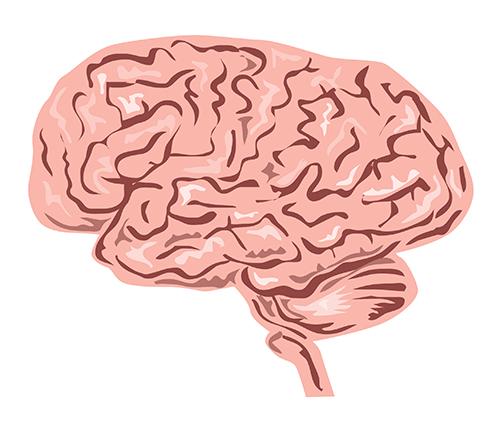 Наш характер зависит от размера мозга
