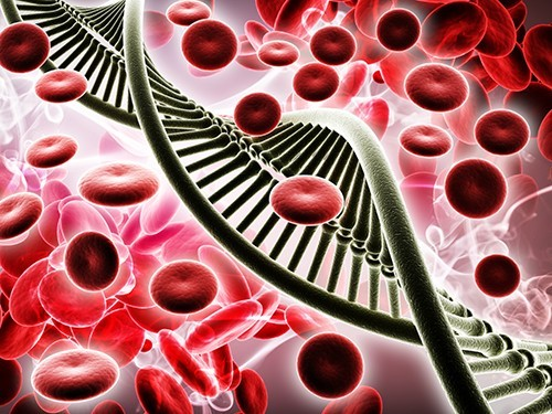 Создан тест для выявления генов, связанных с наследственными заболеваниями сердца