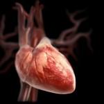Капли, настои и сборы помогут при пороках сердца