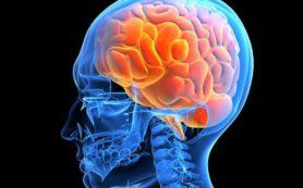 Тимьян и арника при сотрясении мозга