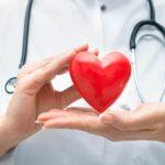 Биологи выяснили, как формируются пороки сердца