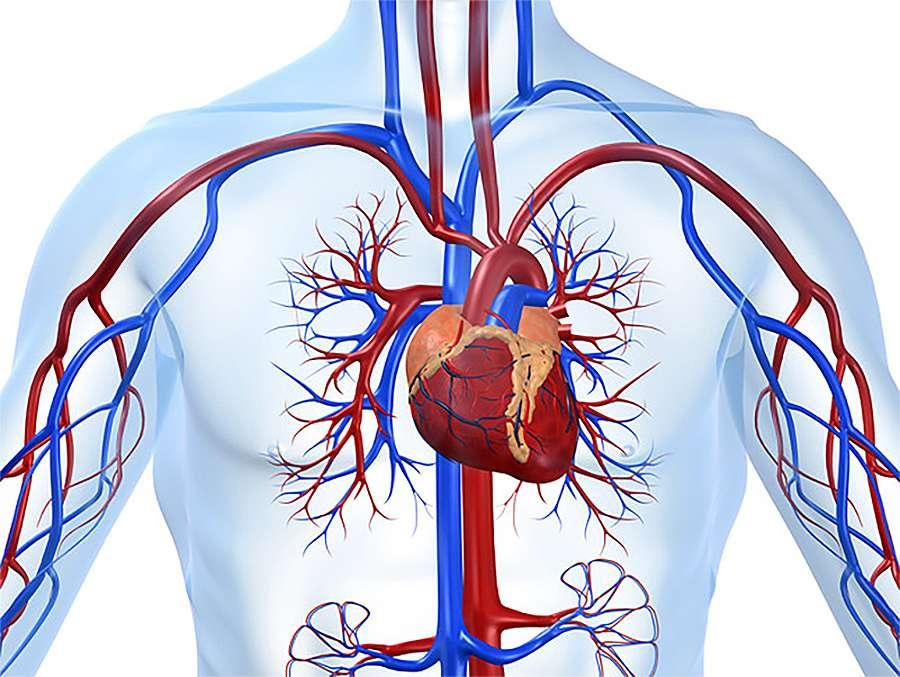 Цельное зерно защищает от болезней сердца