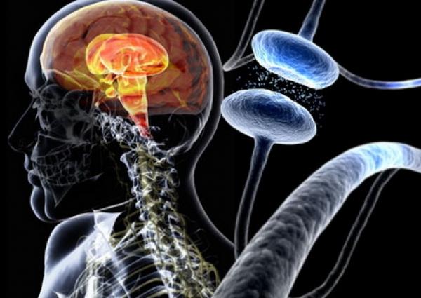 Ягоды как профилактика болезни Паркинсона