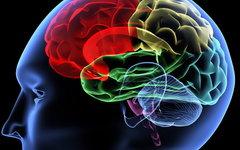 Ученые попытаются найти способ оживления головного мозга
