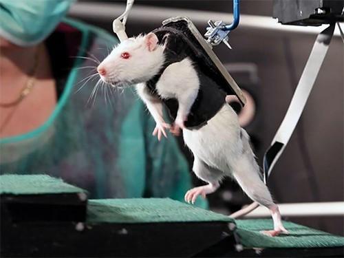 Инъекции стволовых клеток вернули парализованным после инсульта пациентам возможность ходить