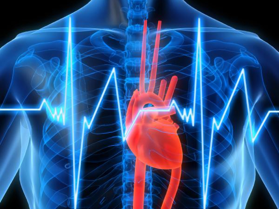 Потребление протеина и болезни сердца