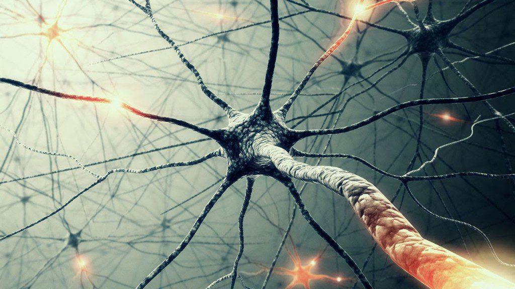При рассеянном склерозе уделите особое внимание сердцу