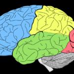 Китайские ученые создали самую подробную карту головного мозга человека