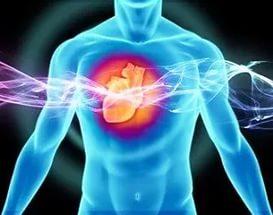 Микробы в кишечнике могут повысить риск сердечной недостаточности
