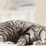 Усыпление кошки в клинике Био-Вет