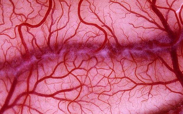 Искусственные вены заменят поврежденные сосуды