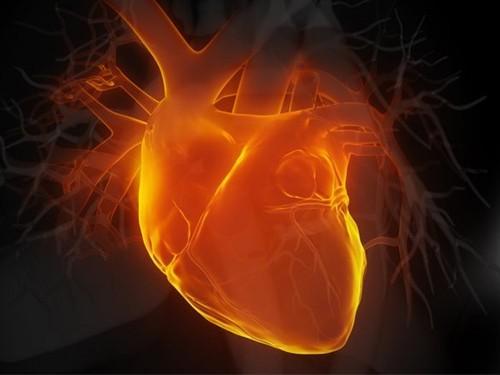 Ученые работают над регенерацией тканей сердца