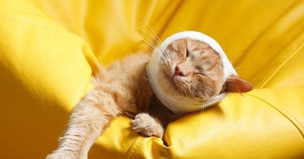Особенности лечения пневмонии у кошек
