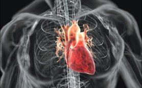 Ученые нашли три фактора для создания новых клеток сердца