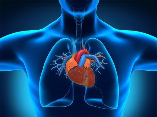 Ученые нашли молекулу, сдерживающую чрезмерный рост сердца