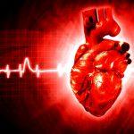 Исследователи научились восстанавливать сердечную мышцу