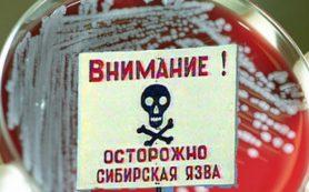Осторожно: сибирская язва