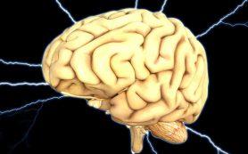 Голодание перезагружает мозг