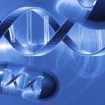 Генотерапия: успех в лечении инфарктов