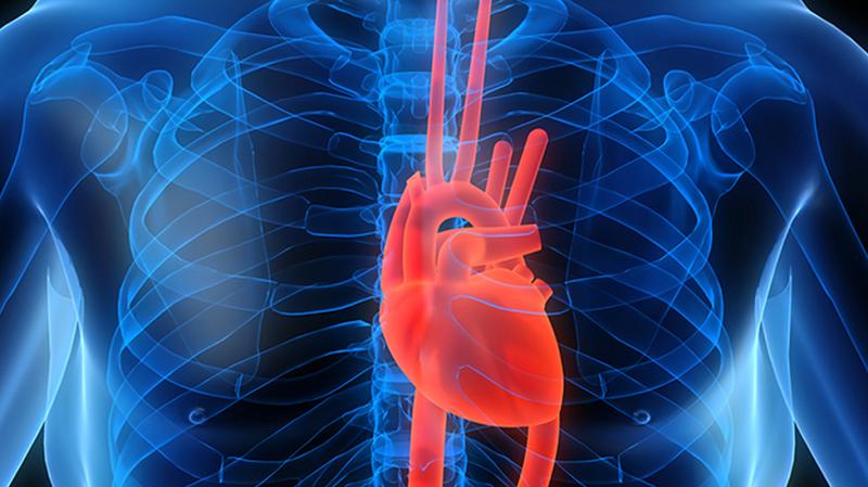 6 простых шагов на пути к здоровому сердцу