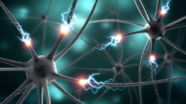 Не все клетки мозга стареют одинаково