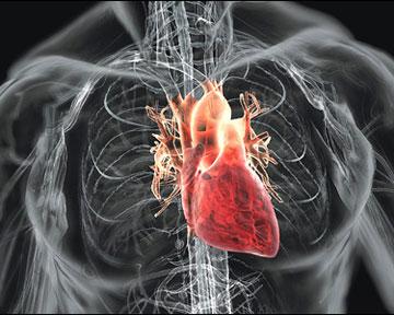 Какие продукты защитят от болезней сердца?