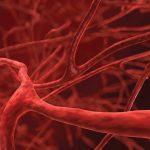 Кровеносные сосуды можно выращивать из жировой ткани