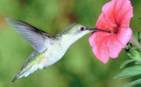 Птичка колибри и другие райские птицы