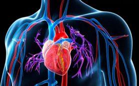 Питание при гипертонии: что можно и что нельзя есть